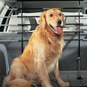 dog taxi manchester